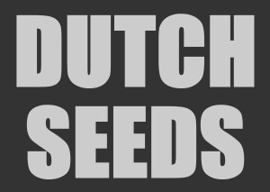 Dutch marijuana seeds for sale
