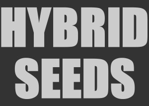 Hybrid marijuana strains for sale