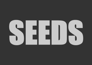Best quality marijuana seed selections