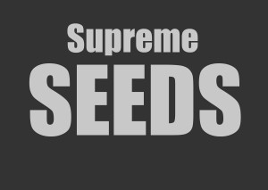 Buy marijuana seeds safely