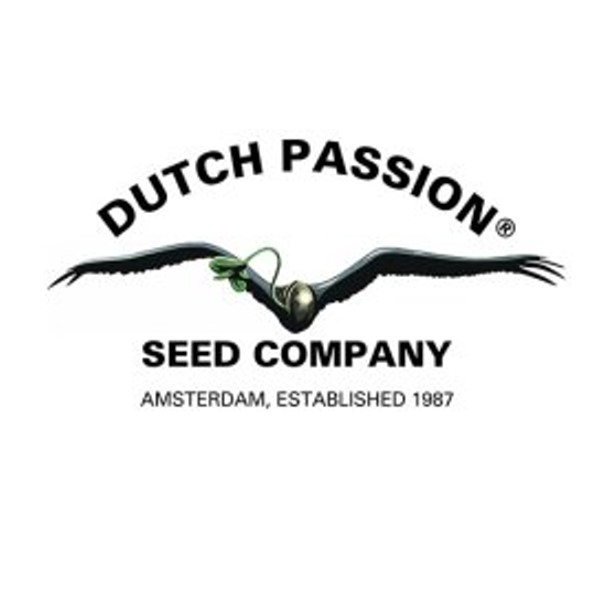 buy dutch cannabis seeds